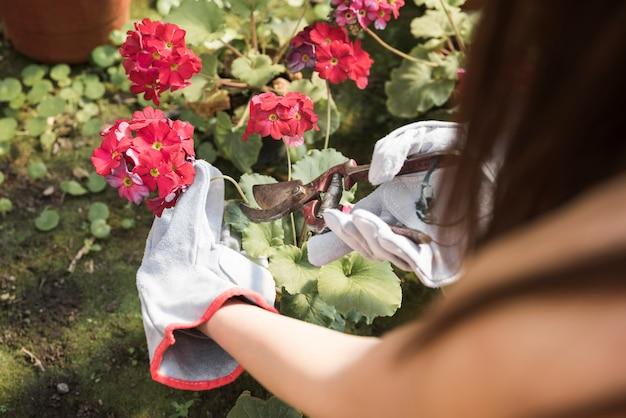 Primo piano di un giardiniere femminile che pota il fiore rosso sulla pianta