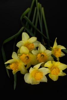 Primo piano di un mazzo di narcisi gialli su sfondo nero