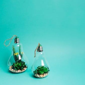 Primo piano di un mini set di arrangiamento di succulente in una lampadina