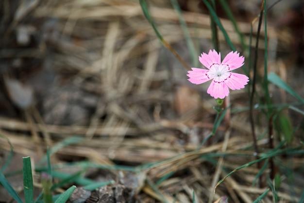 Primo piano di un piccolo fiore rosa che cresce in una vecchia foresta scura