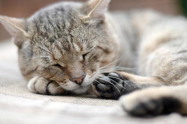 Primo piano di un triste e pigro gatto soriano pisolino sul divano all'aperto in serata