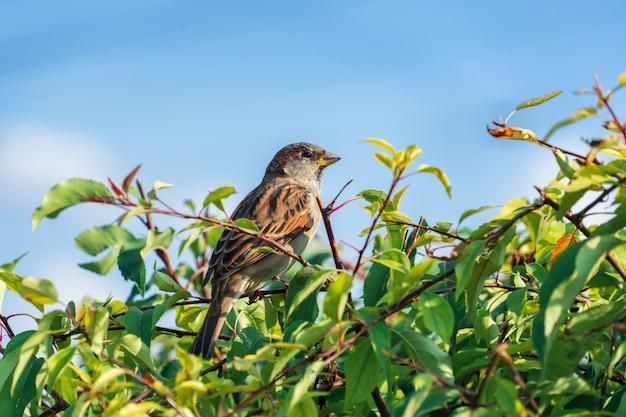 Primo piano di una femmina giovane ladro seduto su un ramo tra gli alberi in una giornata di sole