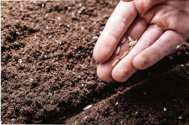 Primo piano di una mano dei maschi che pianta i semi
