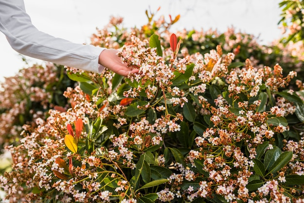 Primo piano di una mano delle ragazze che tocca i bei fiori bianchi