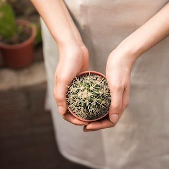 Primo piano di una mano femminile che tiene pianta succulente in vaso