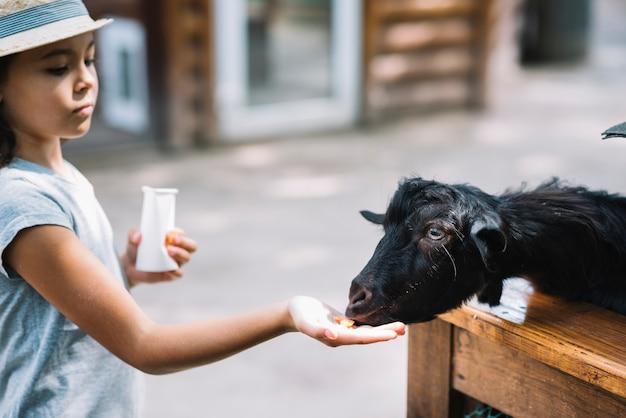 Primo piano di una ragazza che alimenta cibo per capra nera