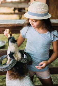 Primo piano di una ragazza che alimenta le pecore nell'azienda agricola