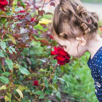 Primo piano di una ragazza che sente l'odore di bella rosa rossa