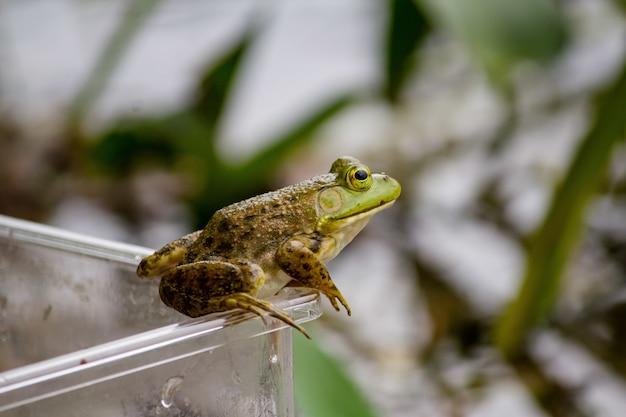 Primo piano di una rana che si siede sul barattolo di plastica