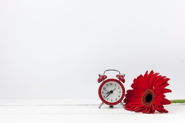Primo piano di una sveglia e fiore rosso della gerbera