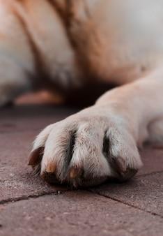 Primo piano di una zampa di cane.