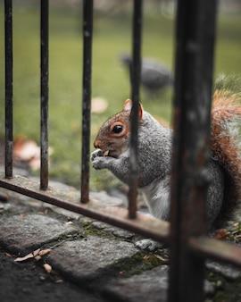Primo piano di uno scoiattolo che mangia
