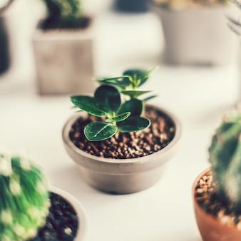 Primo piano di vari piccoli cactus