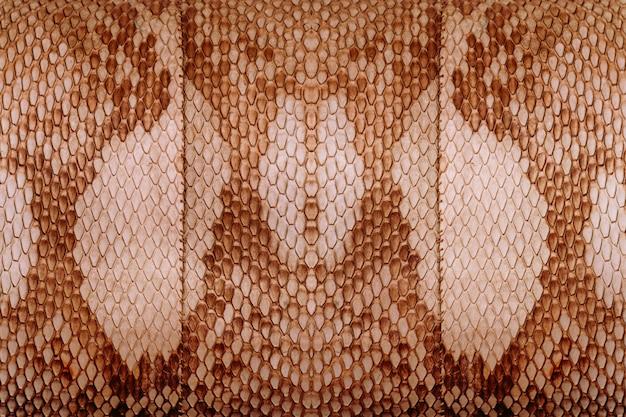 Primo piano di vecchia borsa di pelle di serpente reale, fondo di struttura della natura