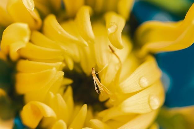 Primo piano estremo del fiore giallo piano di disposizione