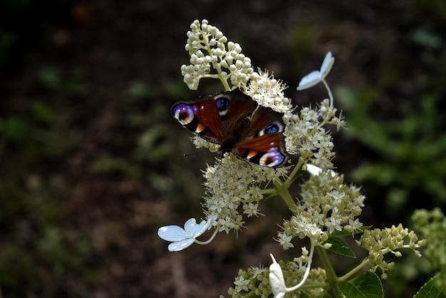 Primo piano estremo di bella farfalla variopinta su un fiore in un giardino
