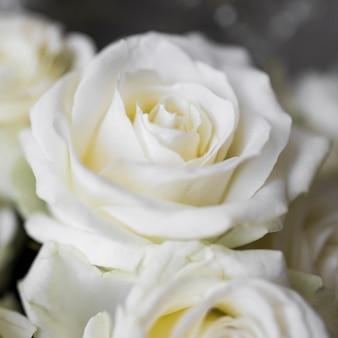 Primo piano estremo di rose bianche