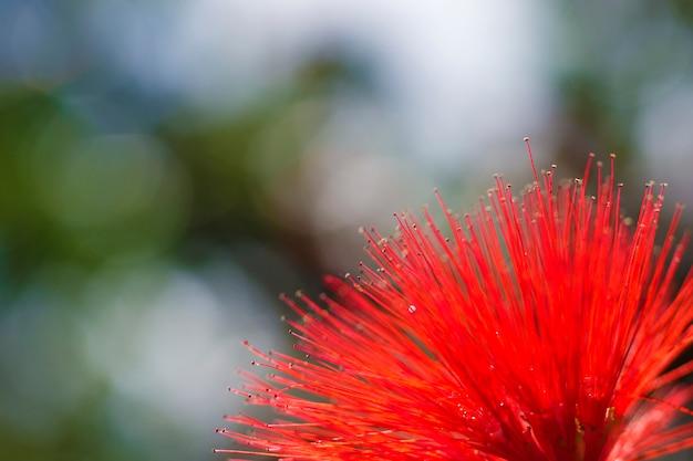 Primo piano fiore rosso primo piano della parte interna di un fiore rosso.