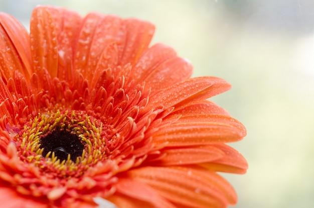 Primo piano, fiore