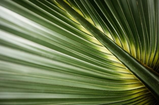 Primo piano foglia tropicale