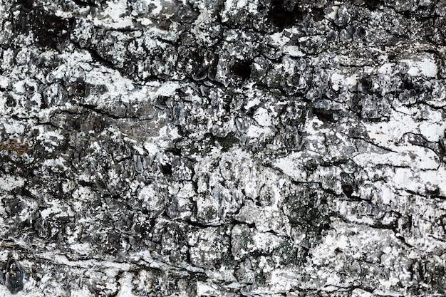 Primo piano in legno texture di sfondo