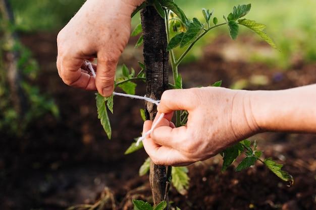 Primo piano picchettando una pianta