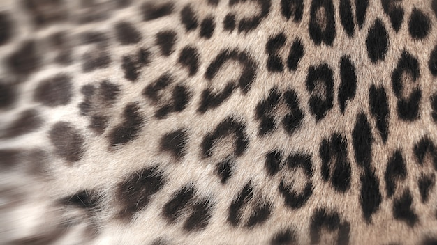 Primo piano reale della pelliccia del leopardo per l'utente dello sfondo