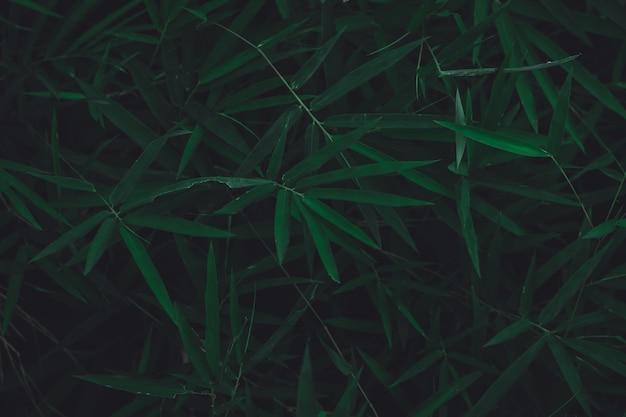 Primo piano scuro della natura delle foglie di bambù.