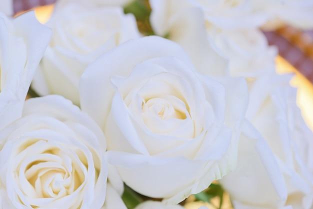 Primo piano sfondo bianco fiore rosa