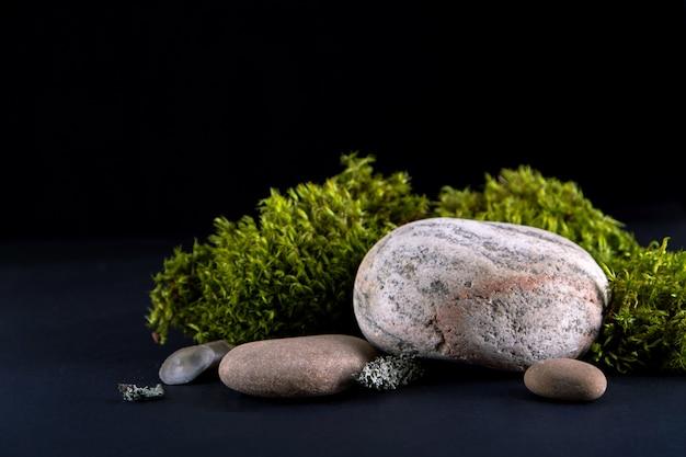Primo piano su corteccia di albero, muschio e pietre