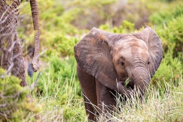Primo piano su elefantino nella savana
