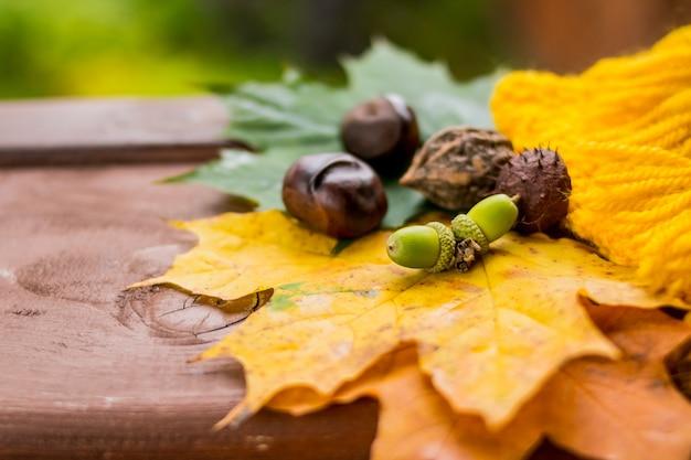 Primo piano su foglie colorate, castagne e ghiande