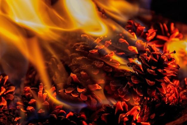 Primo piano su un fuoco con pigne