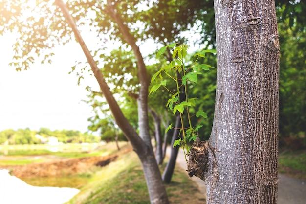 Primo piano sulla prole nata dal vecchio albero
