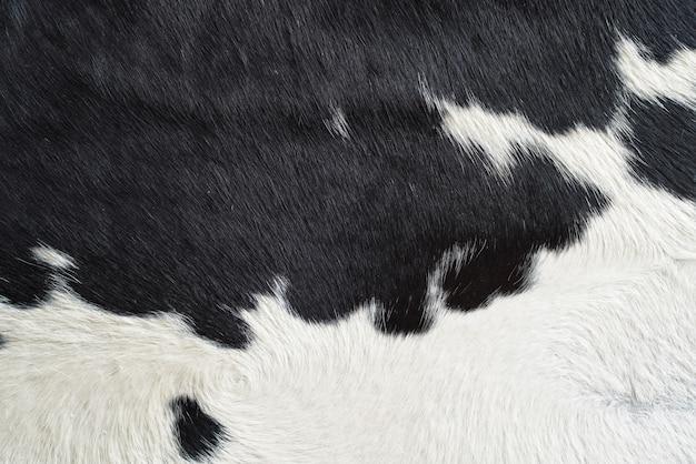 Primo piano sulla struttura della pelliccia della pelle di mucca in bianco e nero