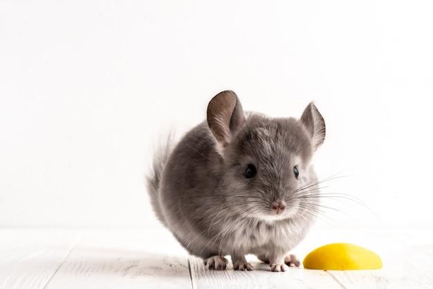 Primo piano un topo grigio sullo sfondo bianco accanto un pezzo di mela.