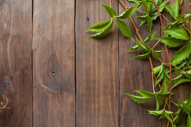 Primo piano verde dell'edera dell'uva nei precedenti di una superficie di legno