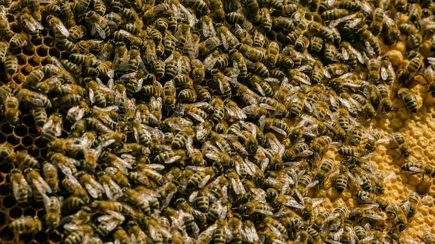 Primo piano vista delle api di lavoro su cellule di miele. api di lavoro a nido d'ape