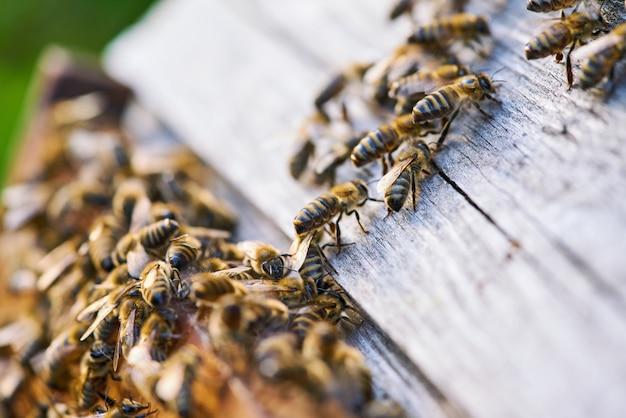 Primo piano vista delle api di lavoro sul nido d'ape con dolce miele. il miele è l'apicoltura di prodotti sani.