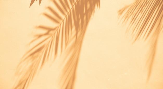 Priorità bassa astratta delle foglie di palma delle ombre su una parete bianca.