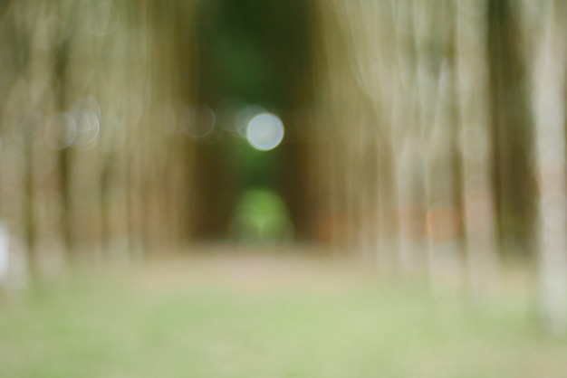Priorità bassa del bokeh, luce del bokeh dell'albero di natale nel colore dorato giallo verde