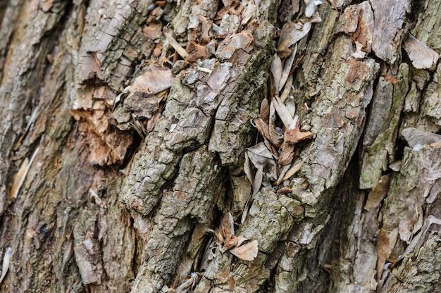 Priorità bassa della corteccia di albero, fuoco selettivo