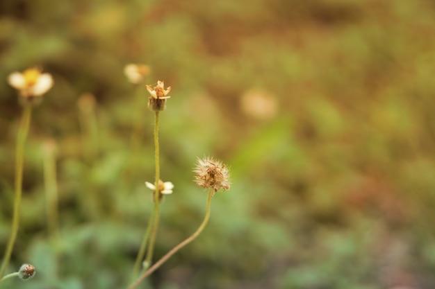 Priorità bassa della natura del fiore dell'erba selvatica
