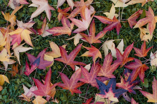 Priorità bassa di autunno. foglie di caduta variopinte sopra l'erba verde