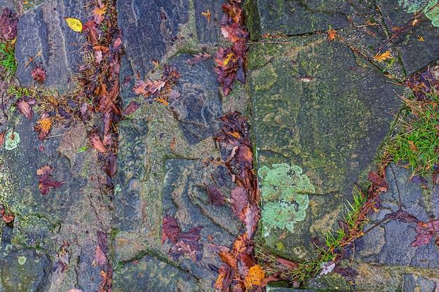 Priorità bassa di autunno, pavimentazione di asfalto bagnato con pozzanghere, foglie di autunno cadute.