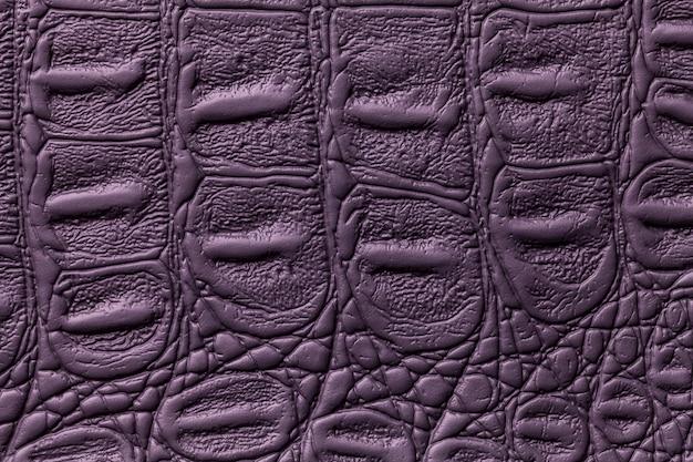 Priorità bassa di cuoio di struttura viola scuro, primo piano. pelle di rettile, macro.