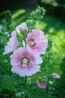 Priorità bassa di disegno di tonalità dell'annata dei fiori