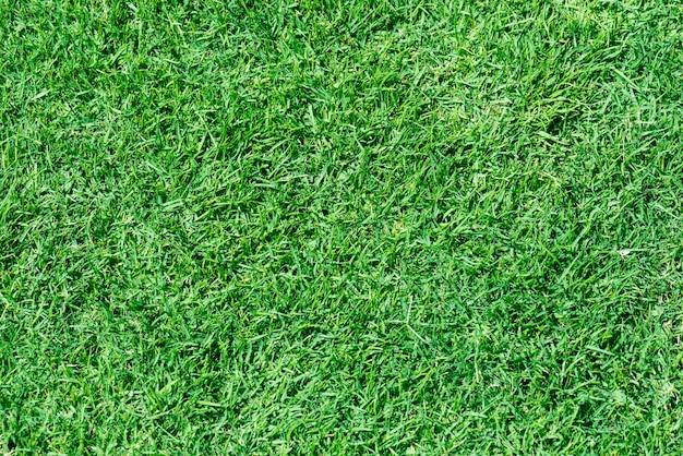 Priorità bassa di erba appena falciata verde