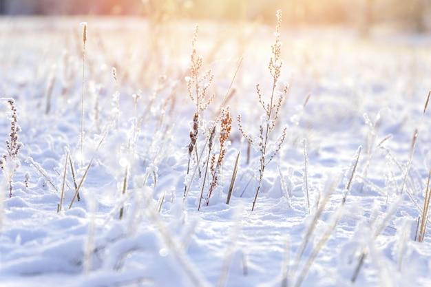 Priorità bassa di inverno, gelo di mattina sull'erba con lo spazio della copia