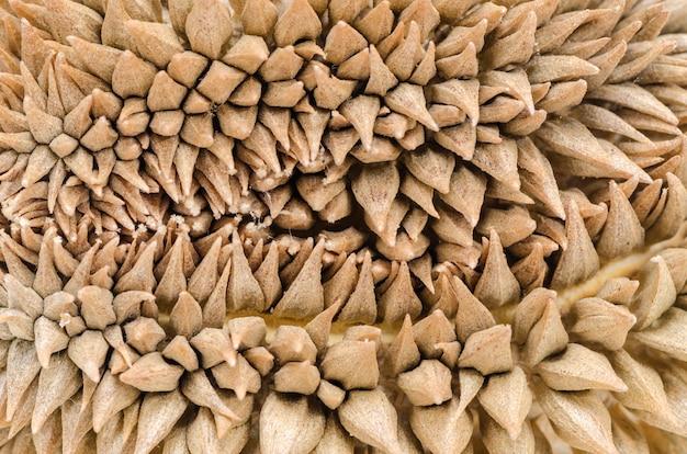 Priorità bassa di struttura del durian